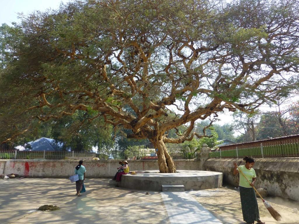 Дерево возле колокола