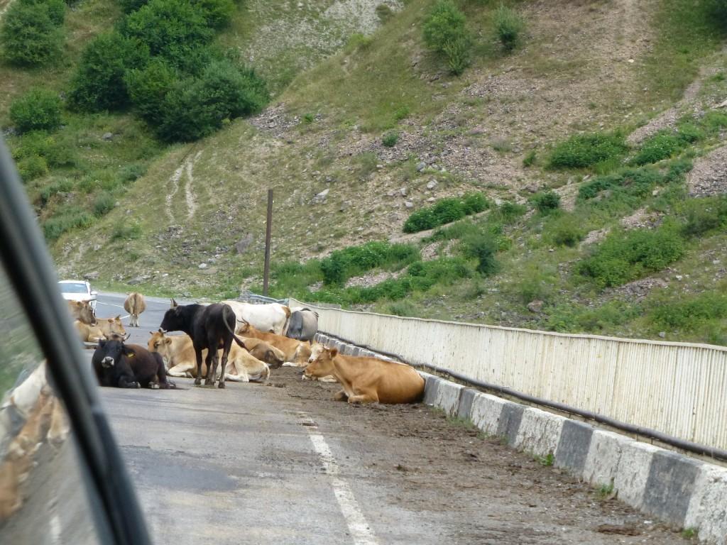 Прямо на мосту расположились коровы