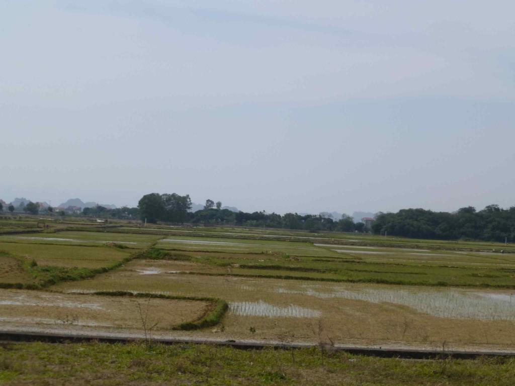 Рисовые делянки