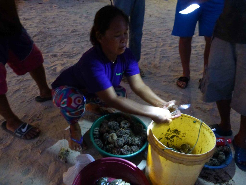 Продажа икры морских ежей