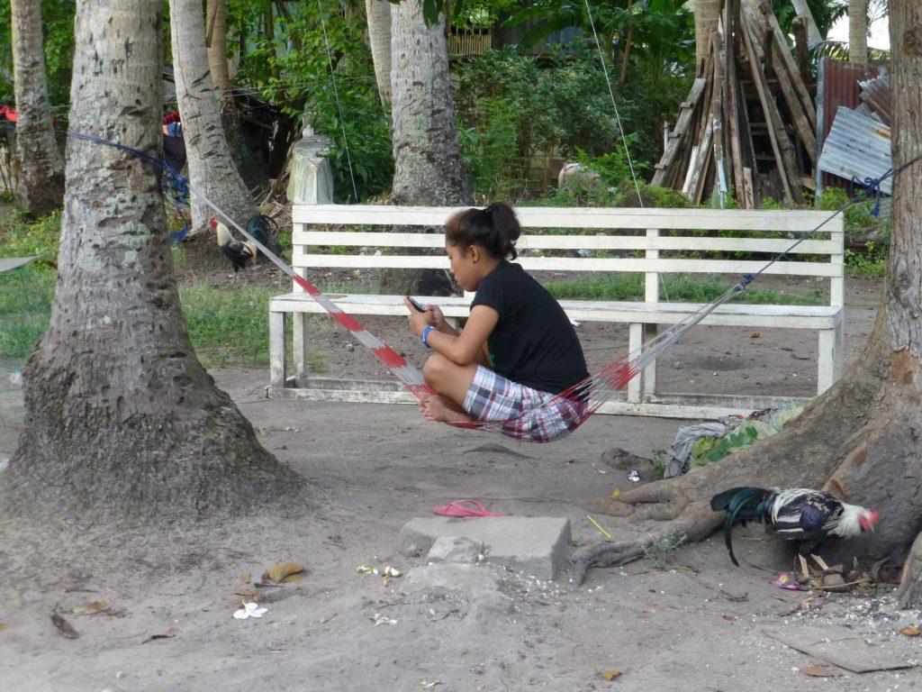Местная жизнь, петух привязан за ногу на веревочке