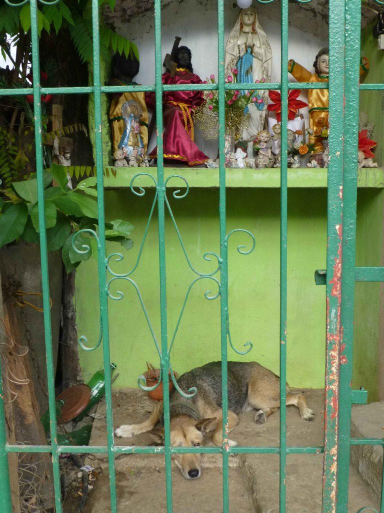 Мадонна возле лачуги и ее охранник