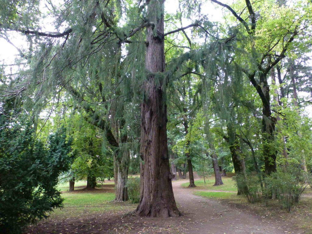 Парк вокруг музея