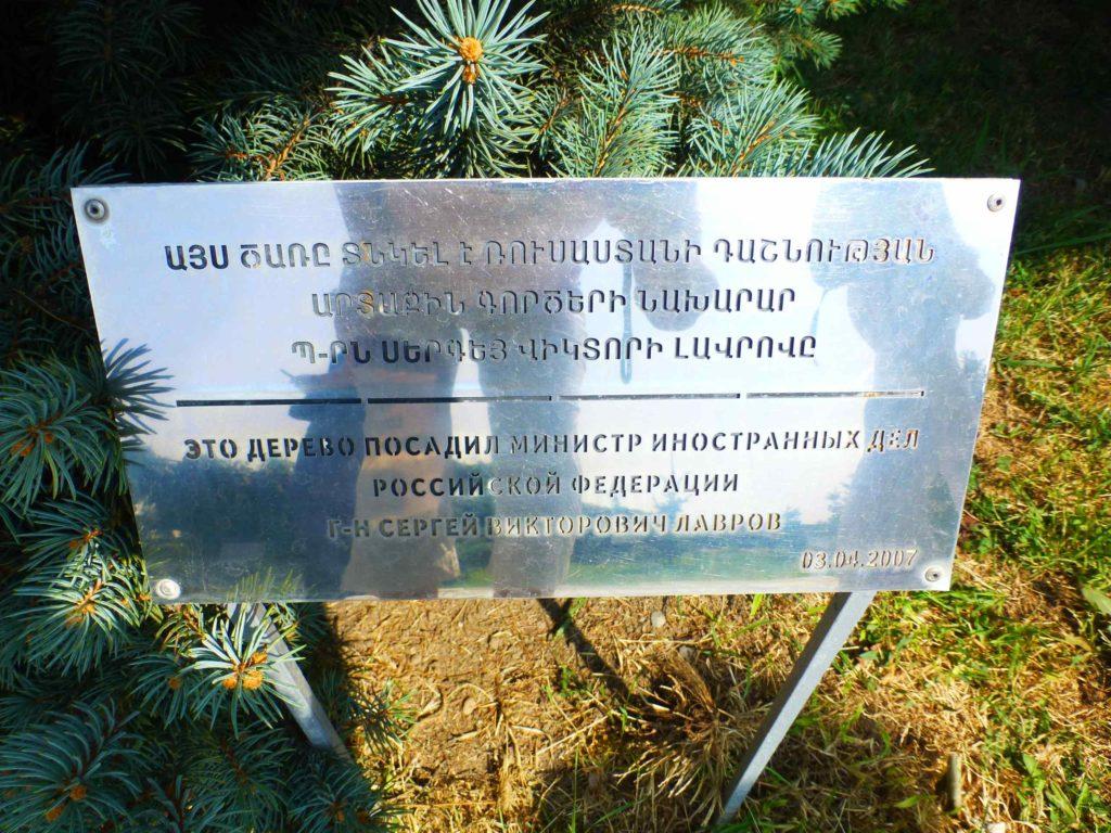 Дерево Лаврова